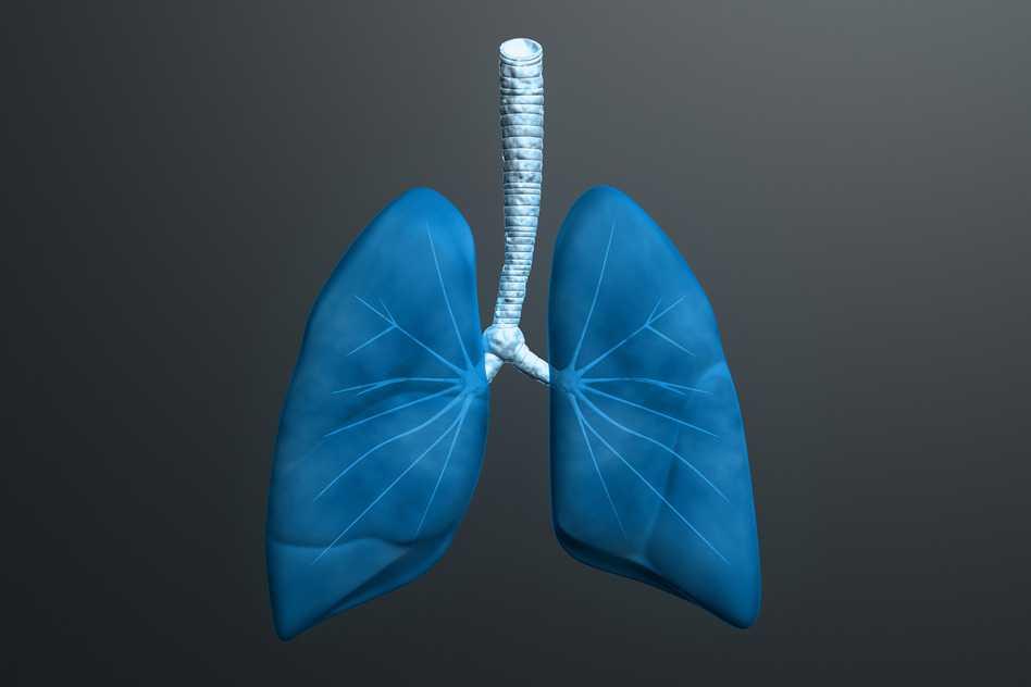 Pulmones y bronquitis