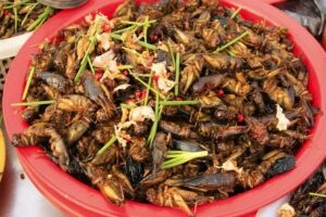 Insectos fritos listos para comer
