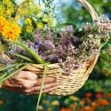 Hierbas para nutrir tu piel